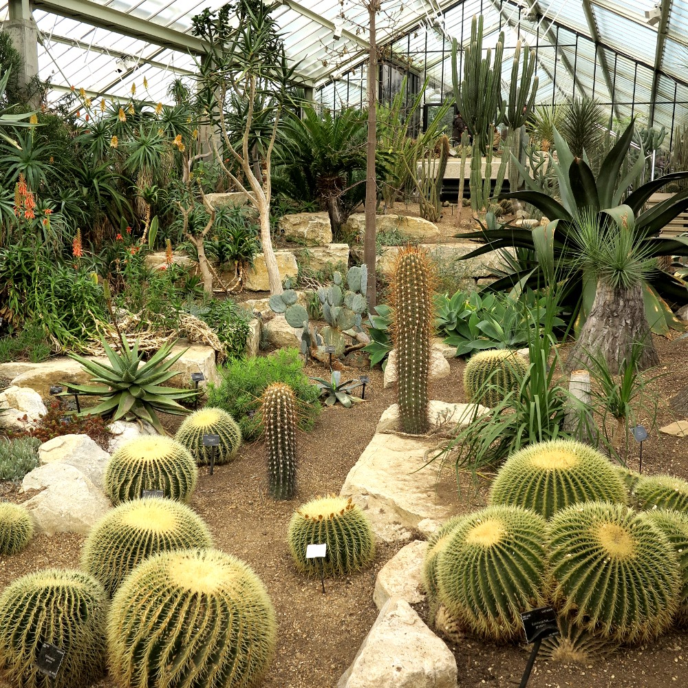 The giant garden of cacti - Dave's favourite part of the park and my least favourite!