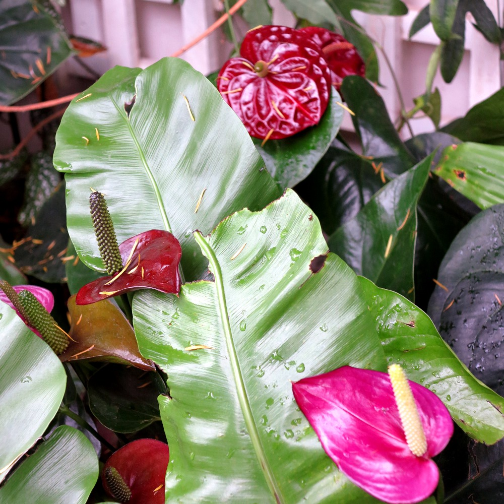 Some beautiful flowers in the Princess of Wales conservatory which was opened by Diana in 1987