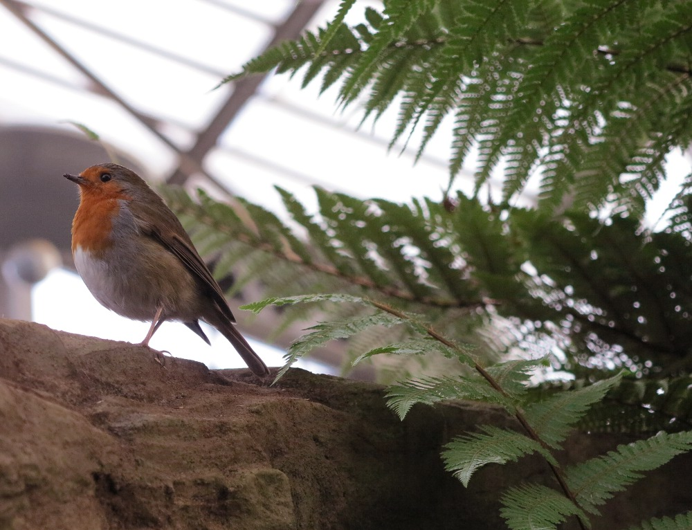 A robin dances about in the prehistoric exhibit