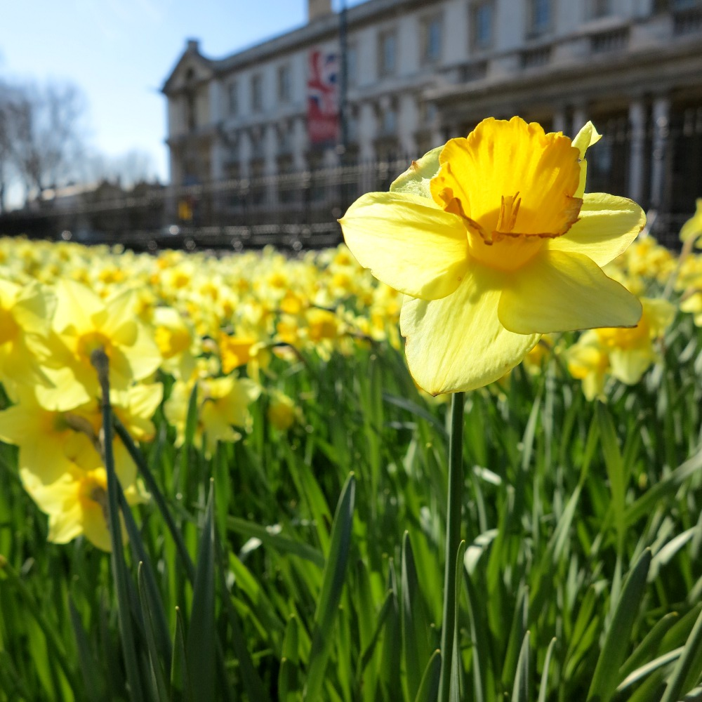 Greenwich is a perfect destination for a sunny day