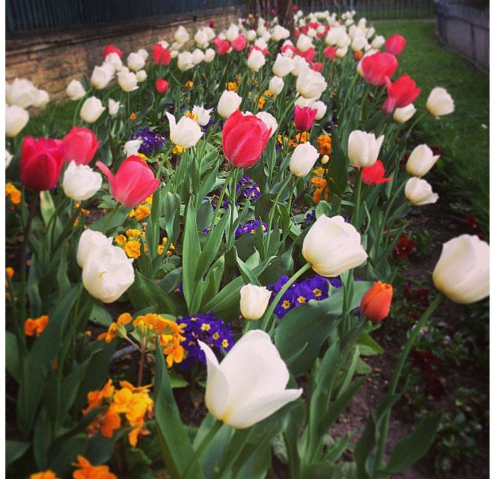 flowers on instagram double barrelled travel