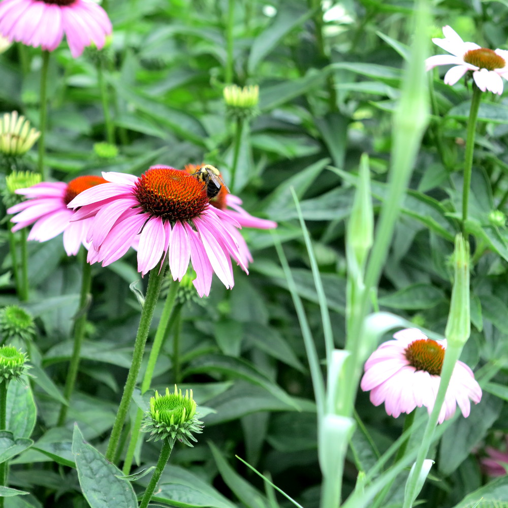 Flowers at the Highline Garden in NYC  New York City Double-Barrelled Travel