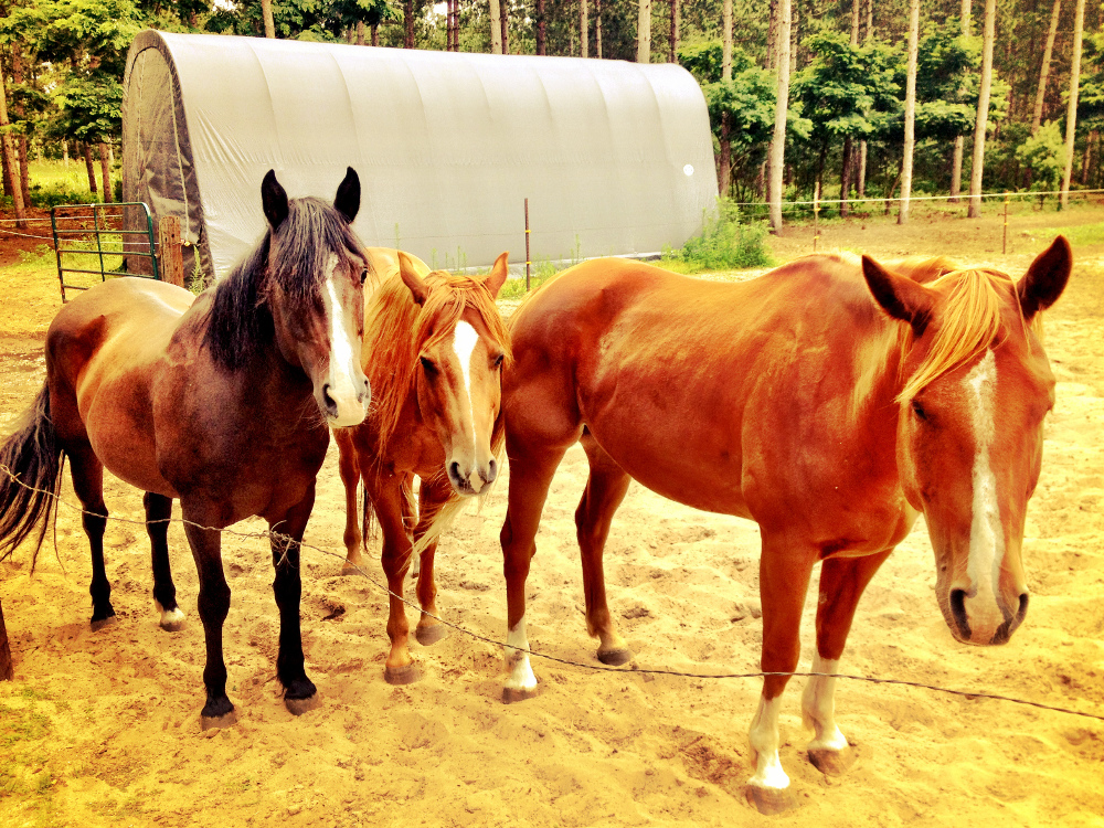 House sitting horses Double-Barrelled Travel