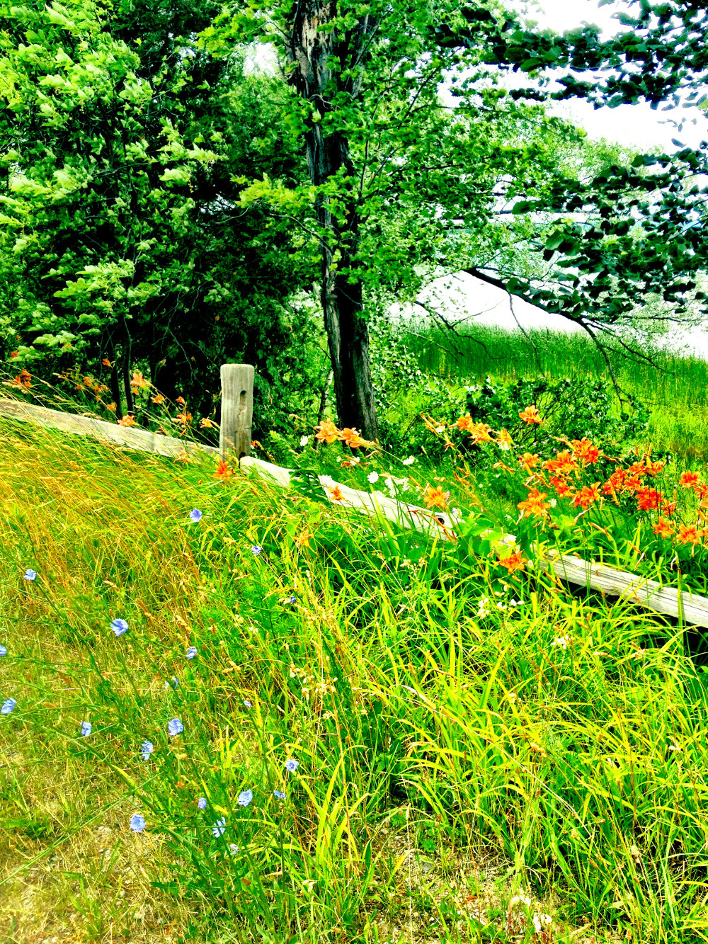 Wildflowers on Old Mission Peninsula in Traverse City Double-Barrelled Travel