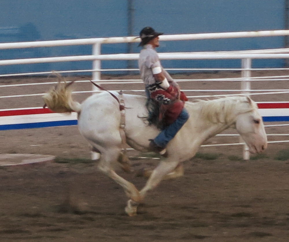 A horse bucking his rider at Cody rodeo Double-Barrelled Travel