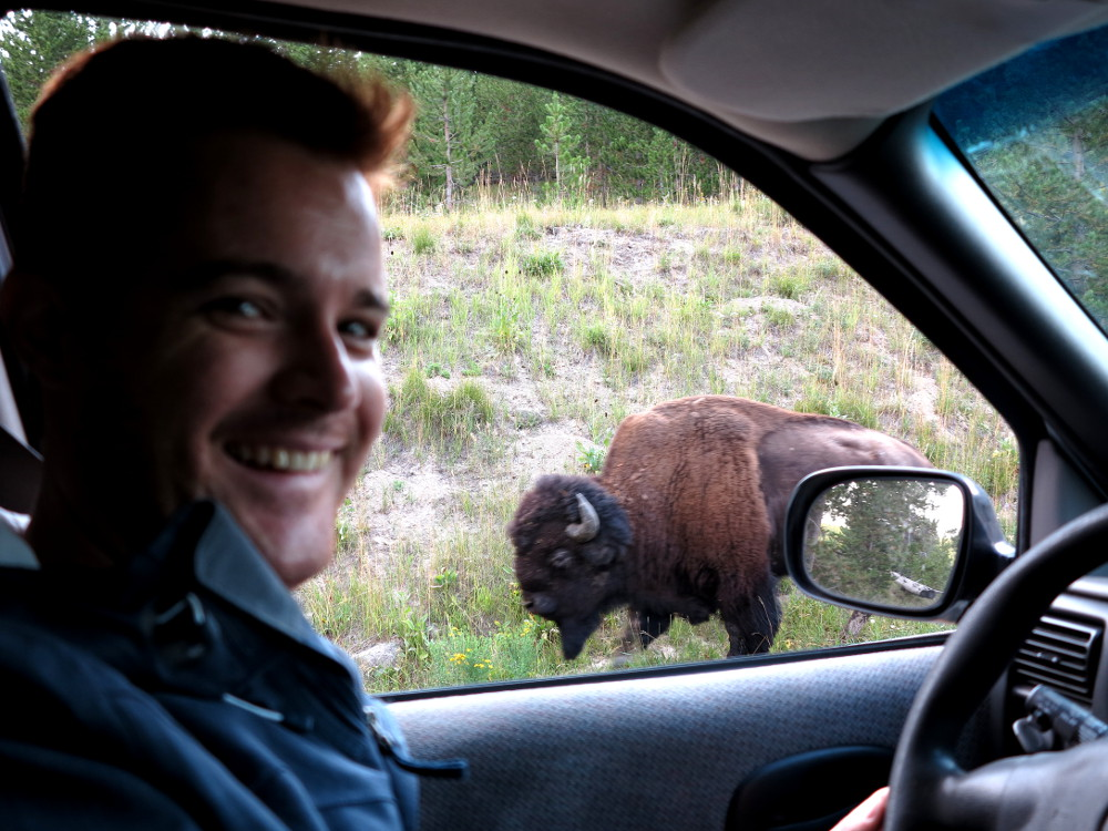 Buffalo at Yellowstone Double-Barrelled Travel