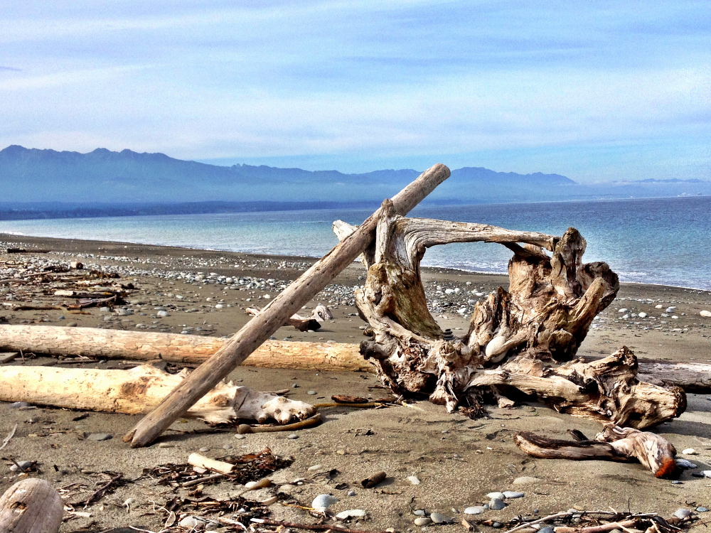 Driftwood on the Dungeness Spit in Olympic National Park Double-Barrelled Travel