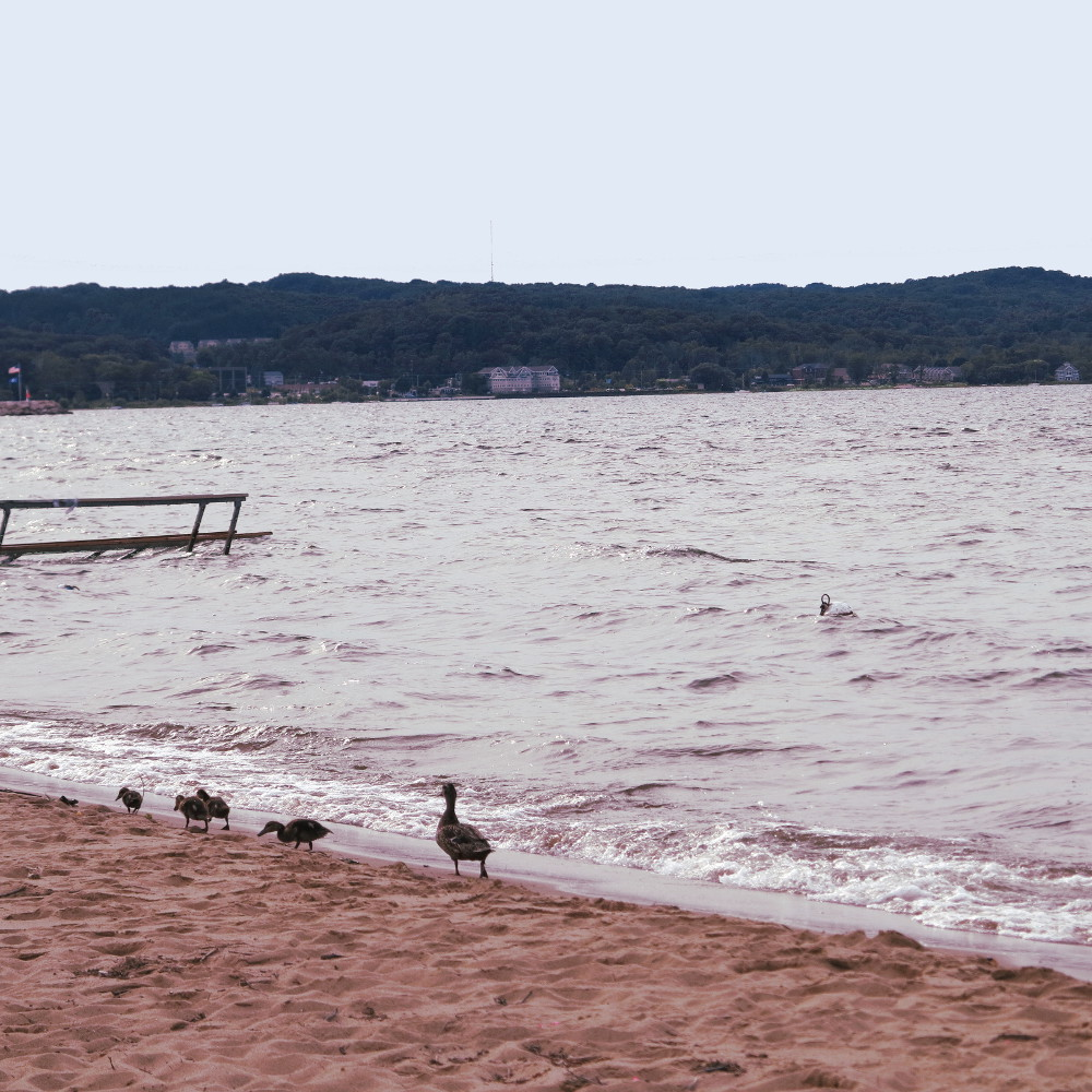 Ducks on Lake Michigan Double-Barrelled Travel