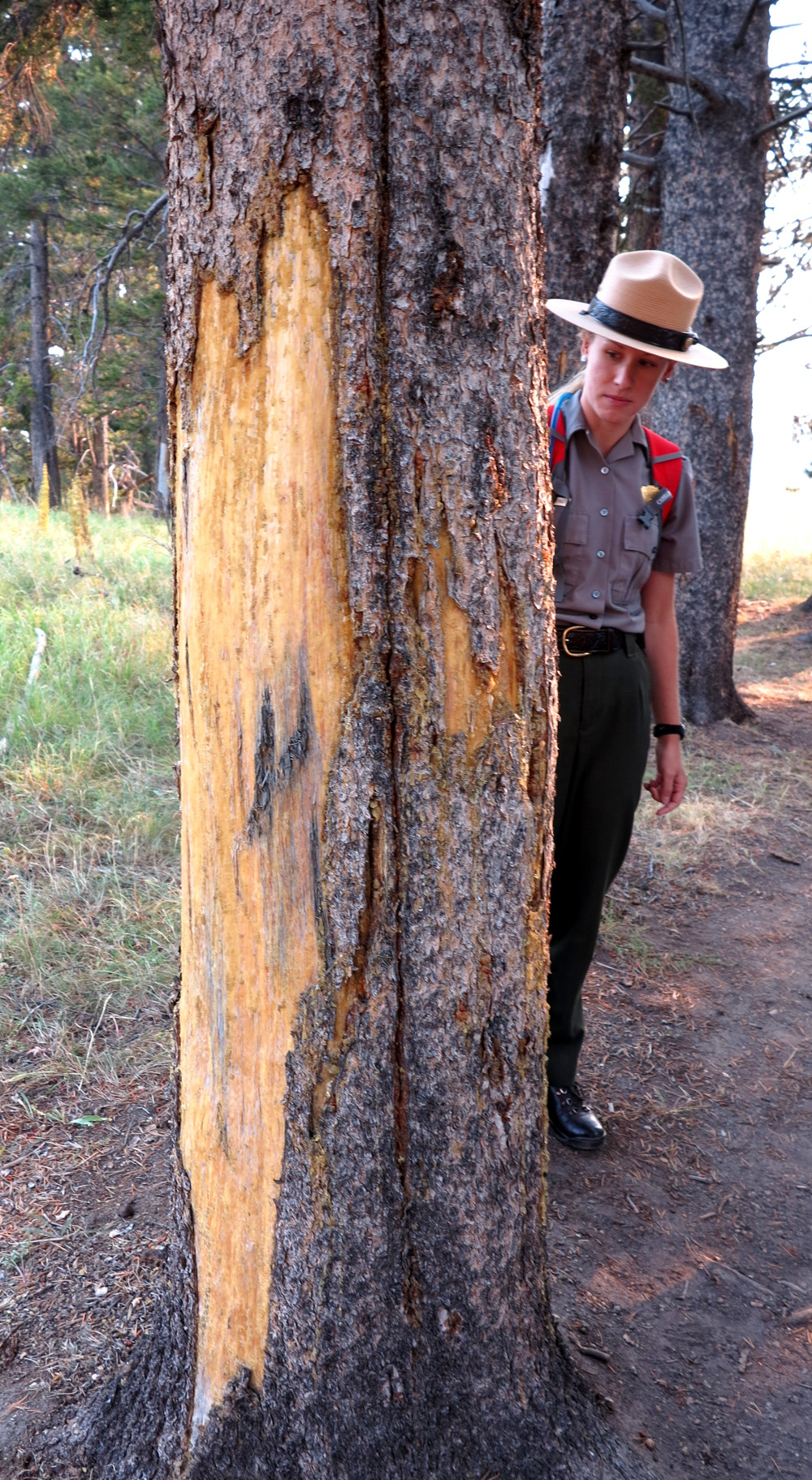 We went on a walk with a ranger and she showed us this bison rub - they use trees to scratch themselves with!