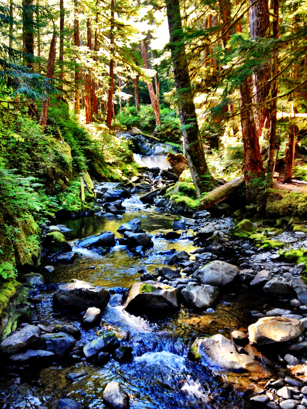 Scenery on Lovers Lane trail near Sol Duc Hot Springs in Olympic National Park Double-Barrelled Travel