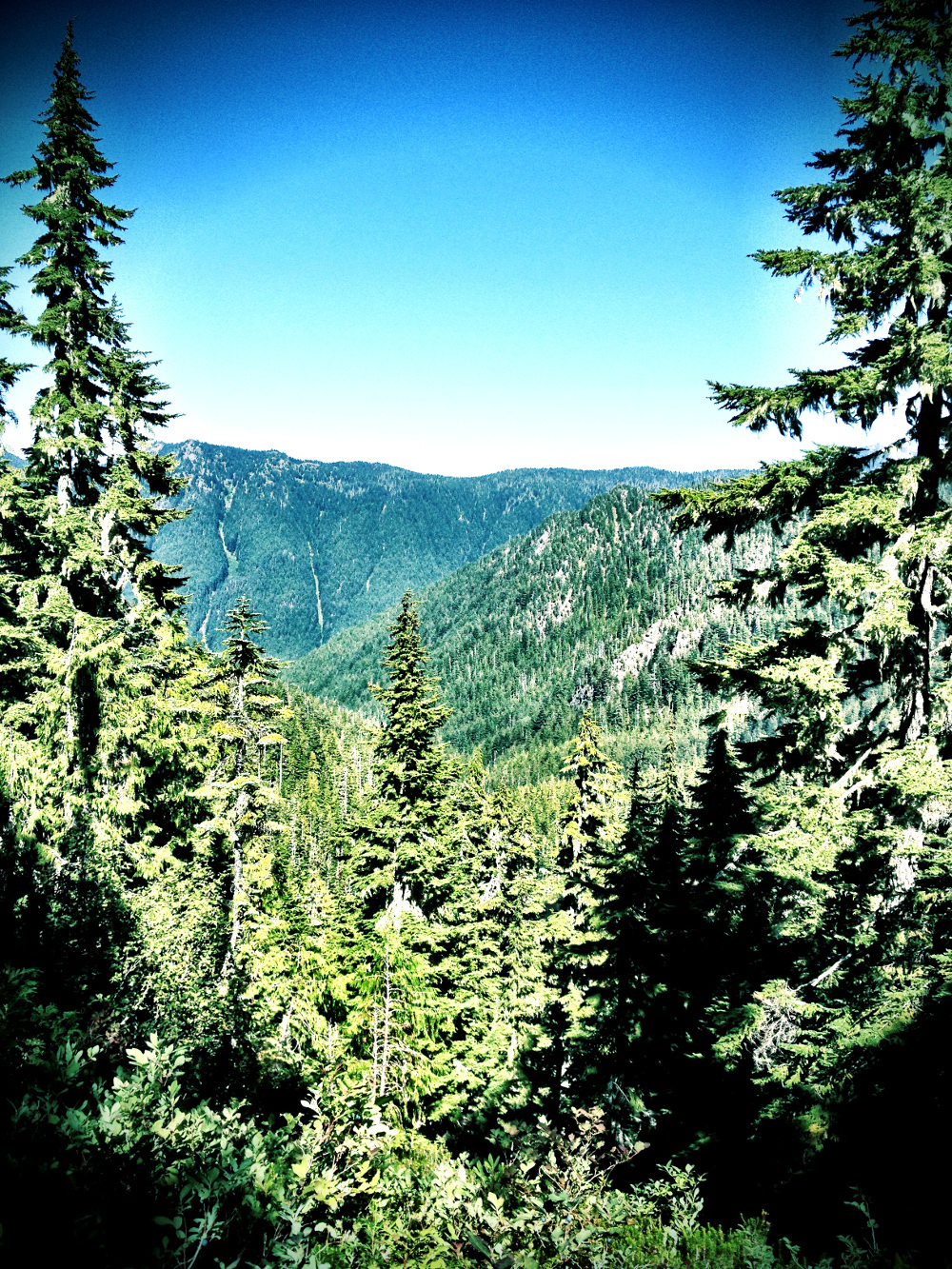 View climbing Little Divide in the Olympic National Park