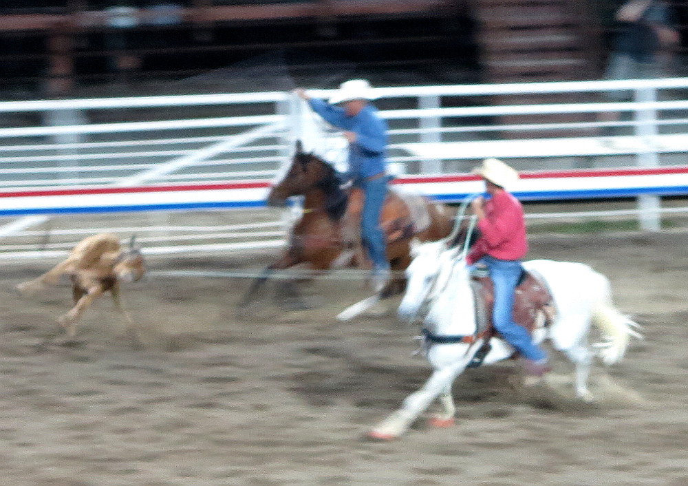 cowboys lassoing a calf at Cody rodeo Double-Barrelled Travel
