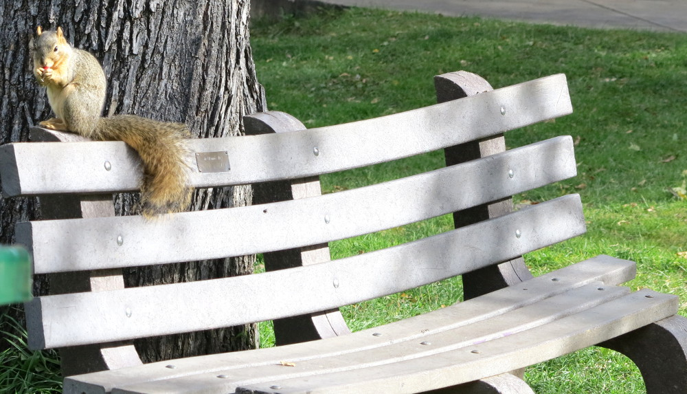 A squirrel enjoys his food at the Chautauqua in Boulder Double-Barrelled Travel