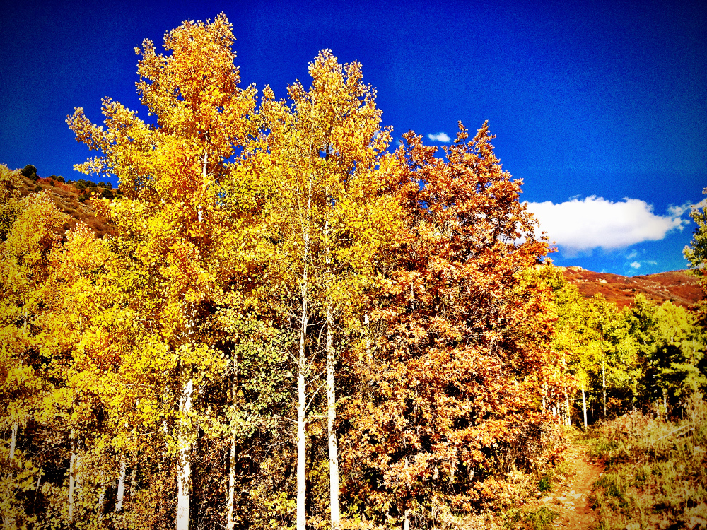 Autumn fall trees in Utah Double-Barrelled Travel