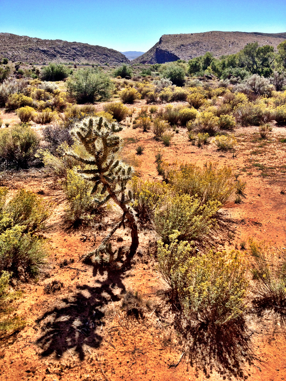 Cactus in the Utah desert  Double-Barrelled Travel