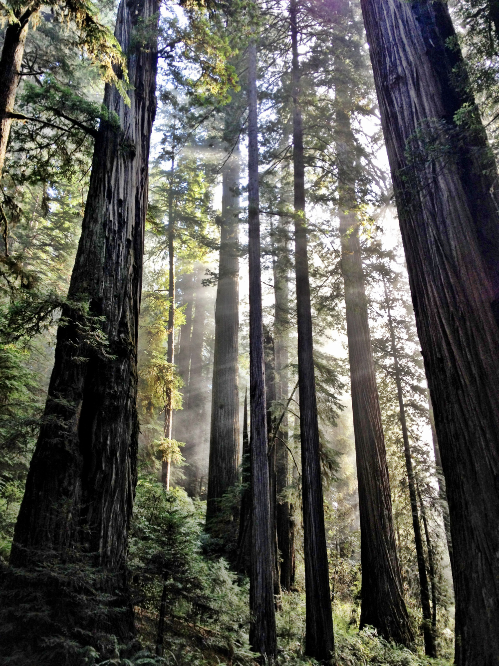 Exploring the Redwood Forest Double-Barrelled Travel
