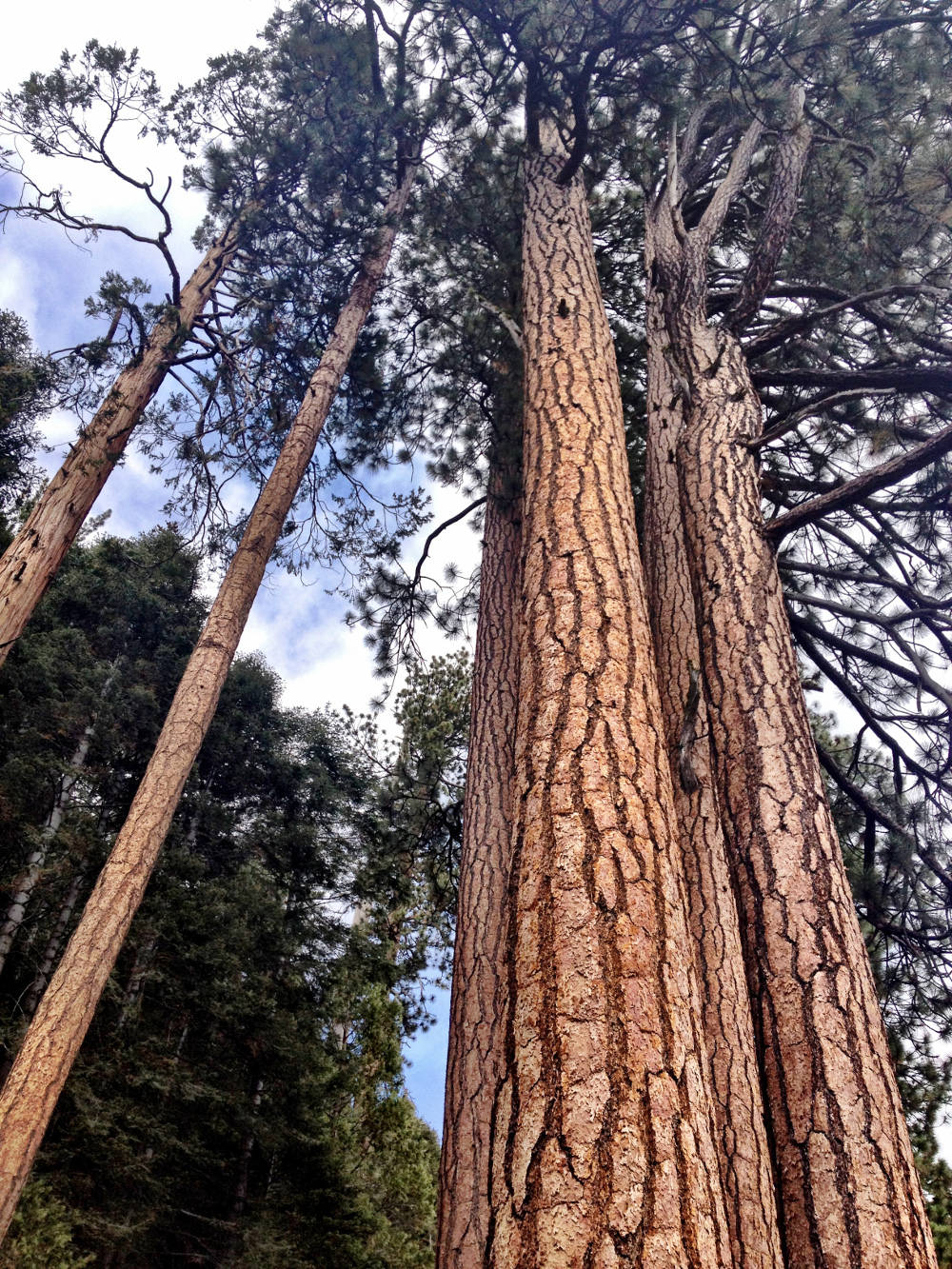 Exploring the Redwoods Forest Double-Barrelled Travel
