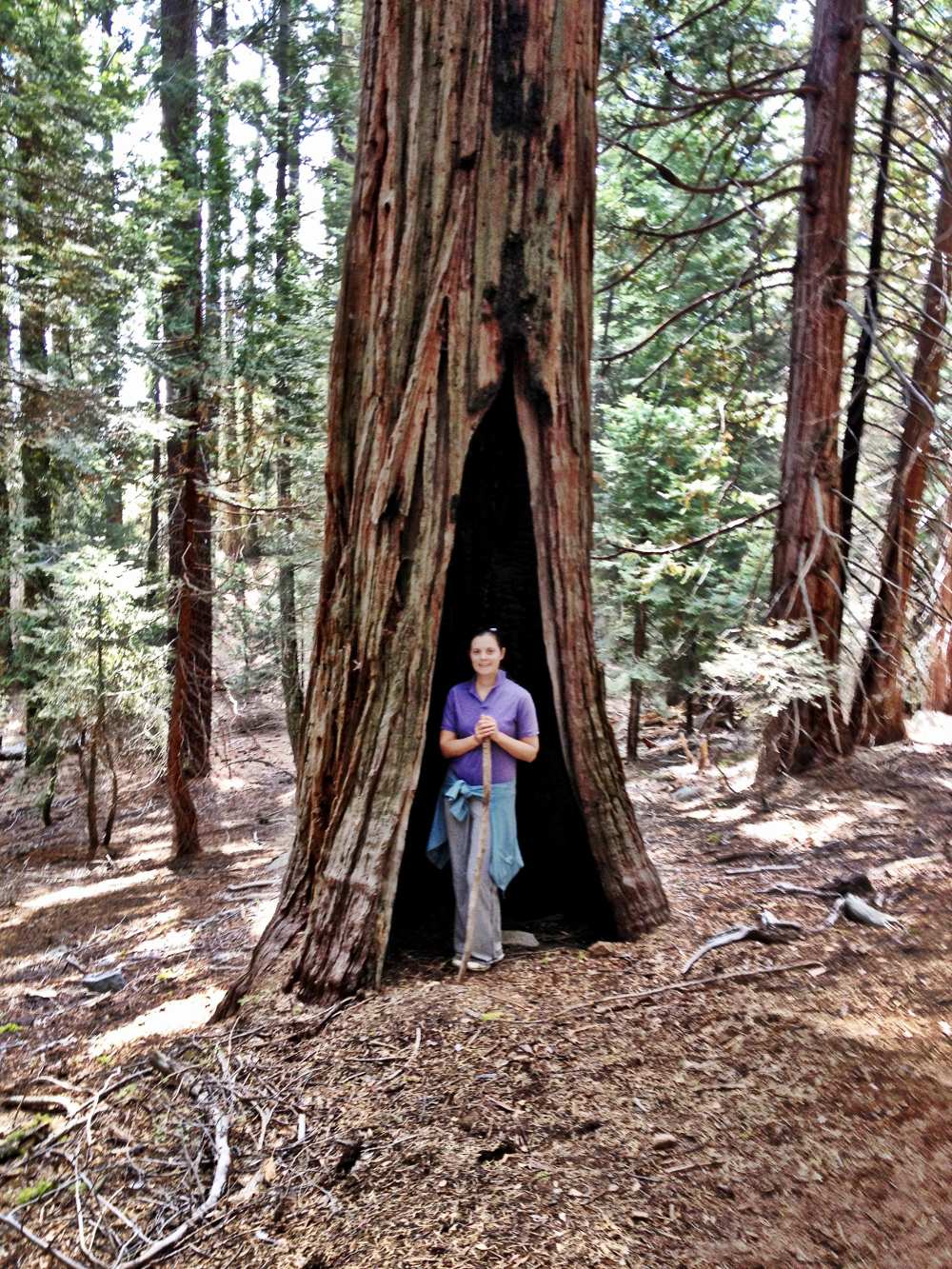 Hiking amongst the redwoods Double-Barrelled Travel