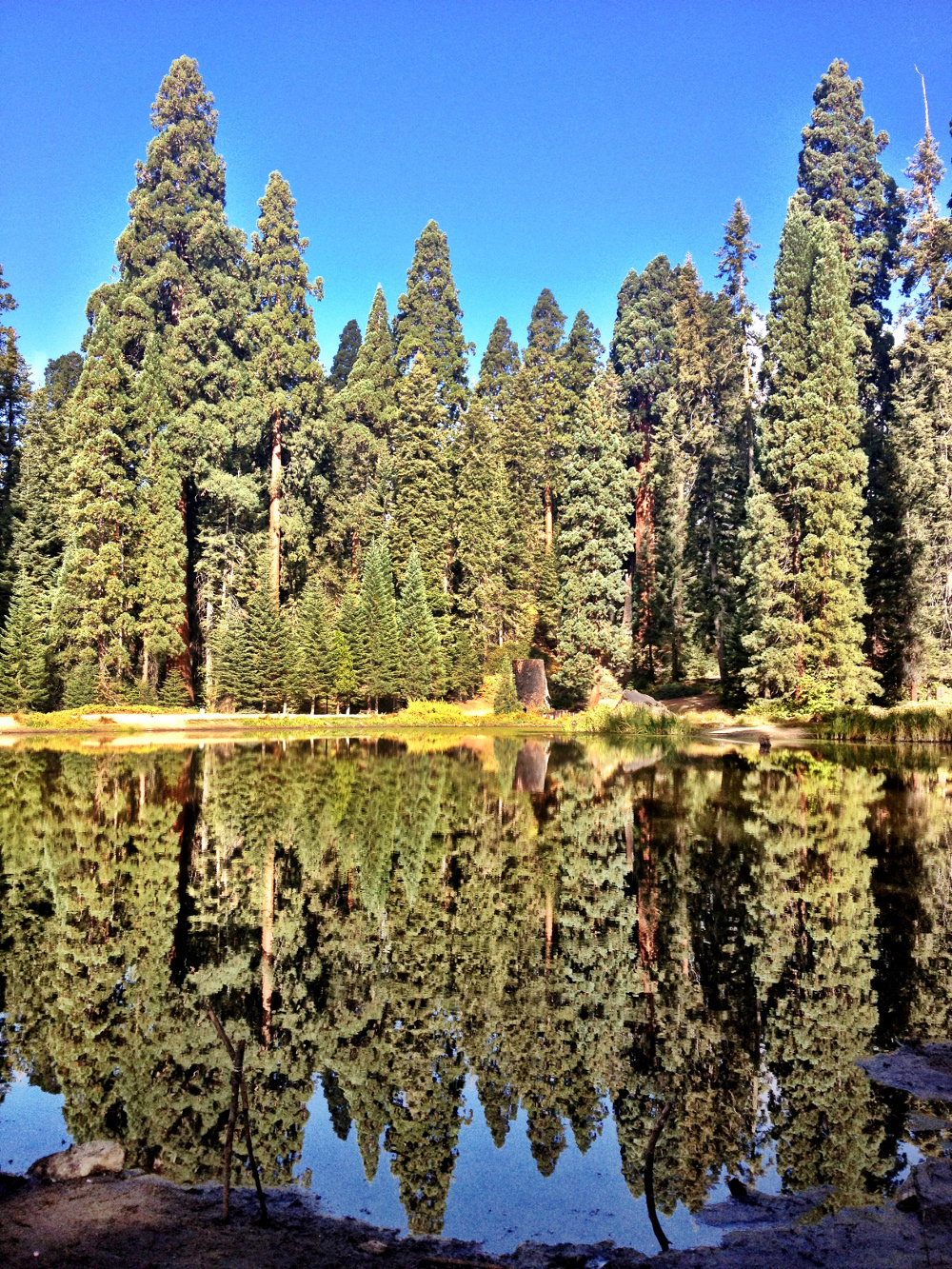 Trees reflecting on the lake Double-Barrelled Travel