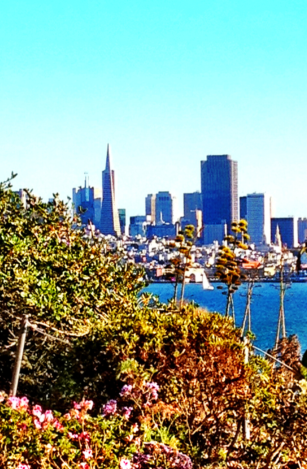 View of San Francisco from Alcatraz Double-Barrelled Travel