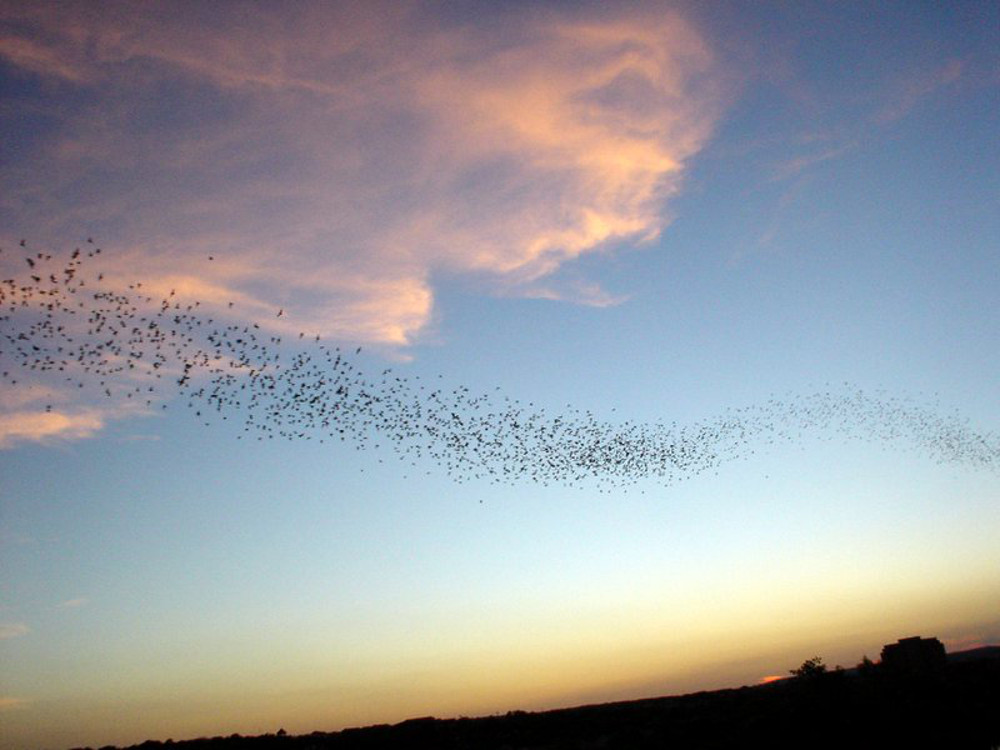 birds flying over Austin Double-Barrelled Travel