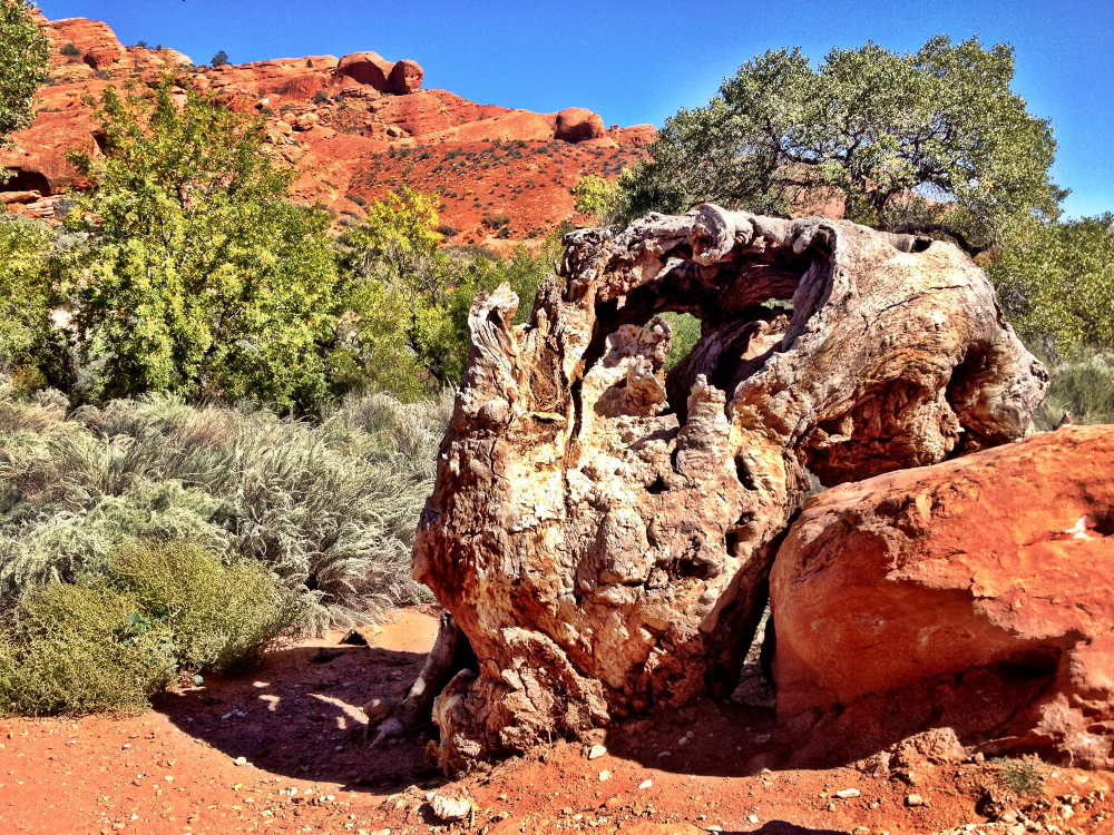 giant tree stump in the Utah desert Double-Barrelled Travel