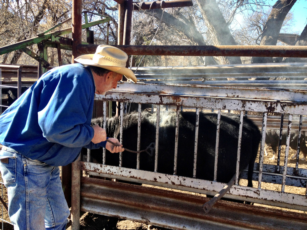 Gerry branding a cow on the Hat T ranch New Mexico Double-Barrelled Travel