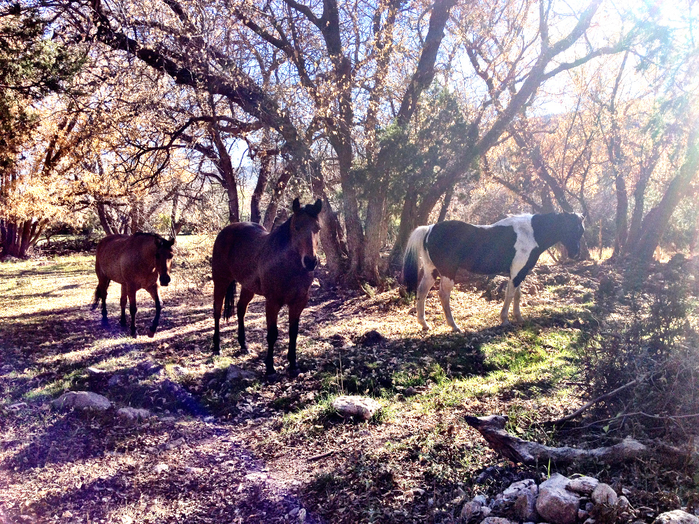 Horses on the Hat T ranch New Mexico Double-Barrelled Travel