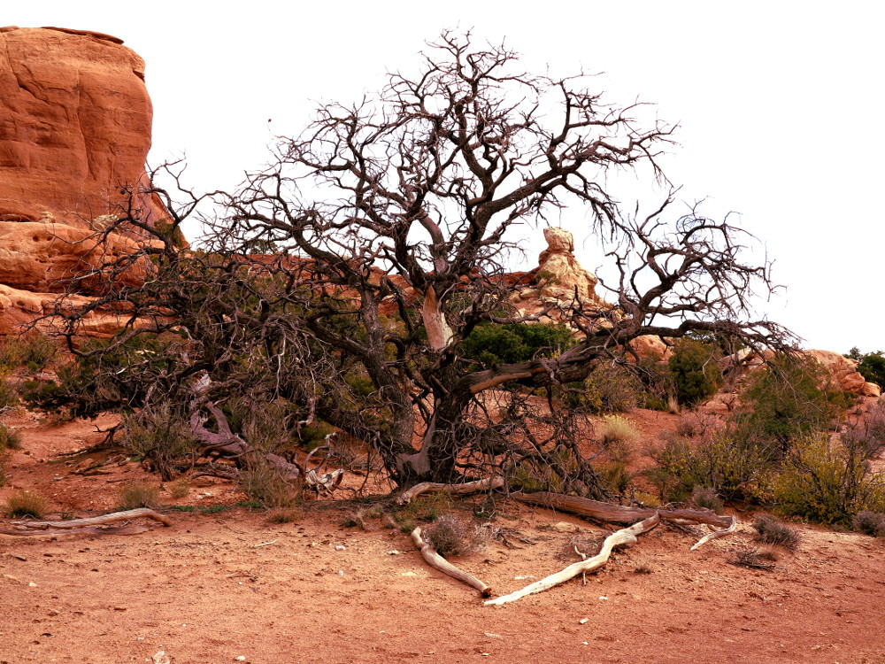 Tree at Arches National Park Double Barrelled Travel