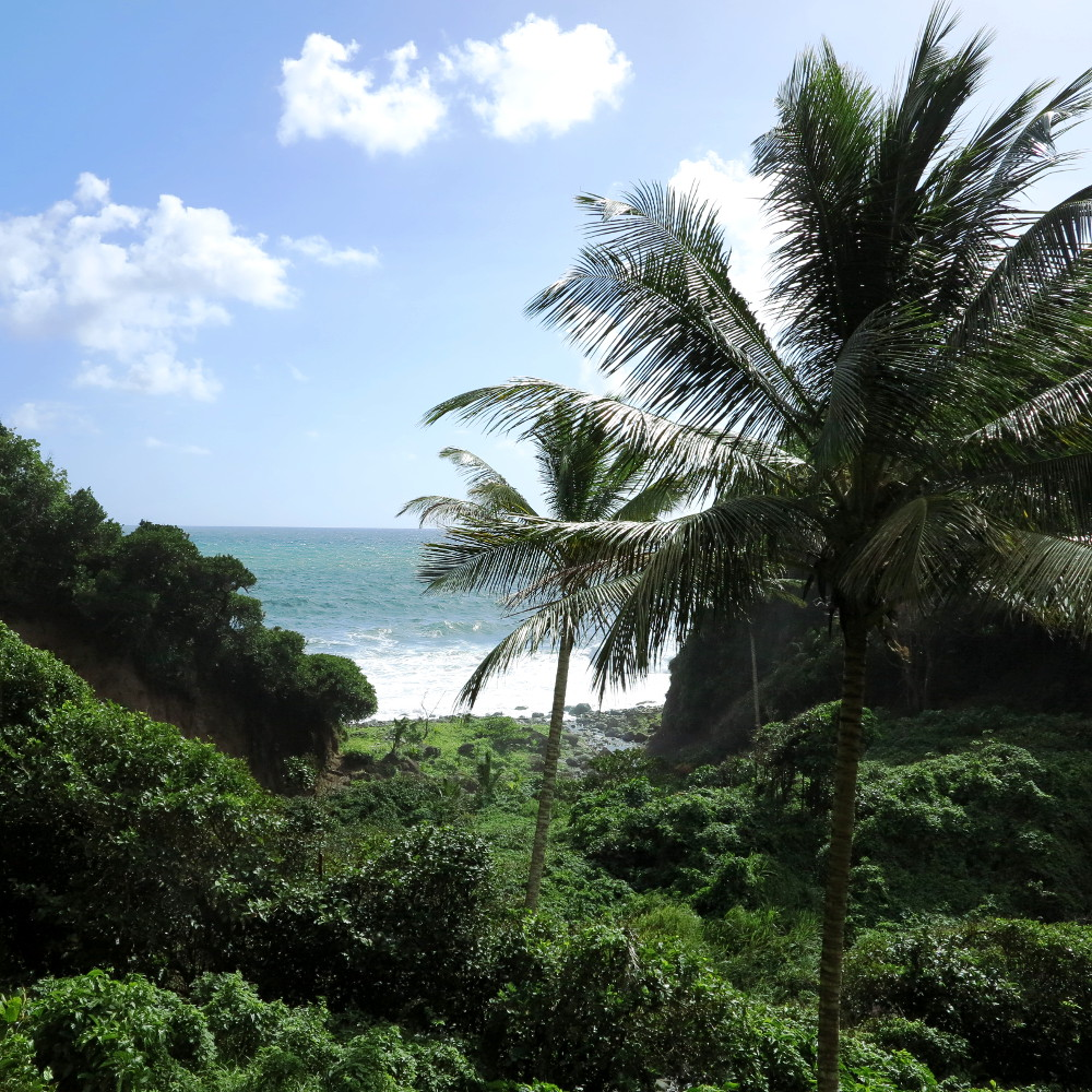 Palm trees Dominica Double-Barrelled Travel