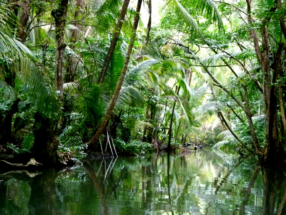 Trees over the Indian River Dominica Double-Barrelled Travel