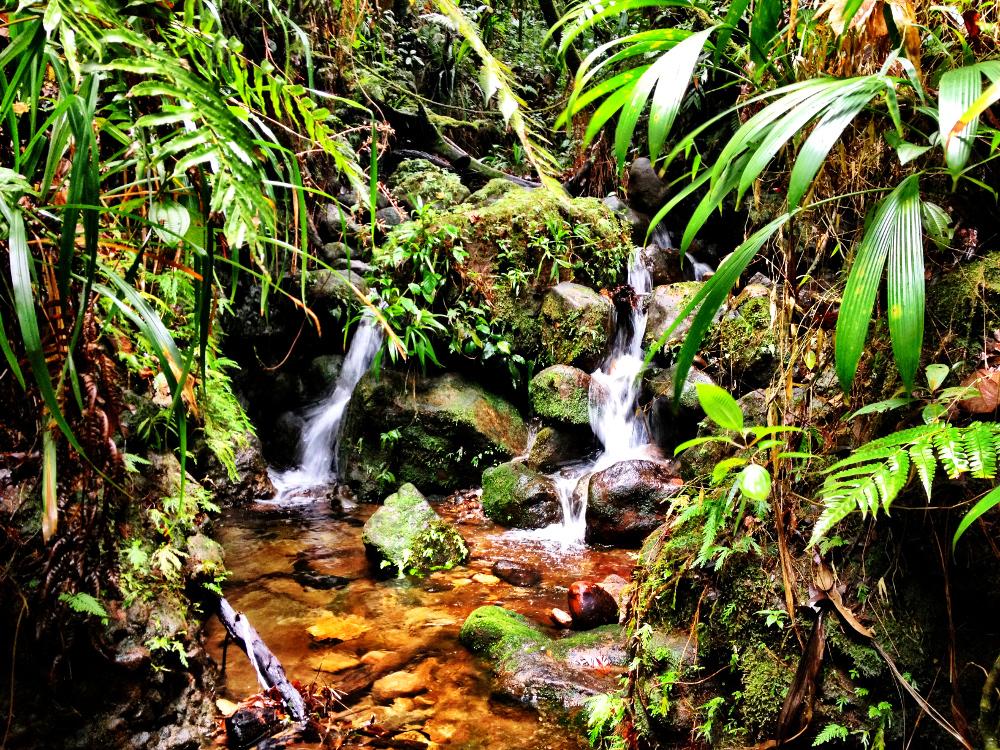 Waterfalls near Emerald Pool Dominica Double-Barrelled Travel