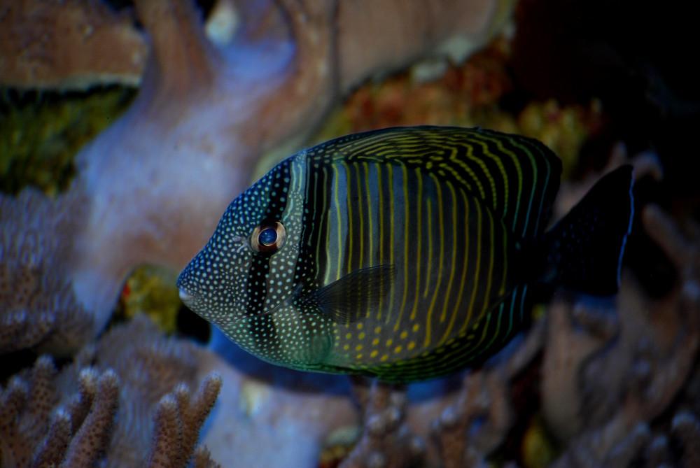 fish in aquarium Double-Barrelled Travel