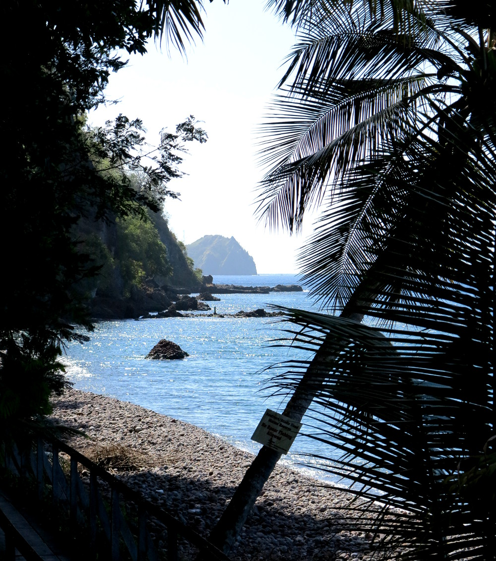 Beach and palm trees at Champagne Reef Dominica Double-Barrelled Travel