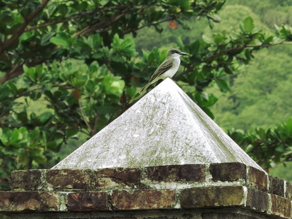 Bird at Fort Shirley Double-Barrelled Travel