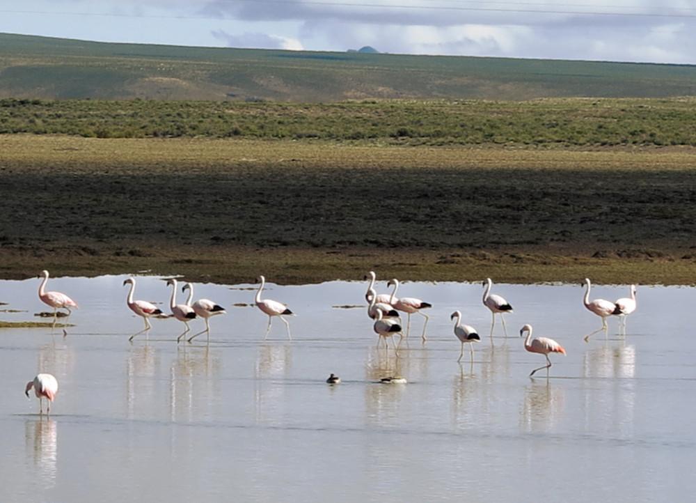 Flamingoes salt flats tour Bolivia Double-Barrelled Travel