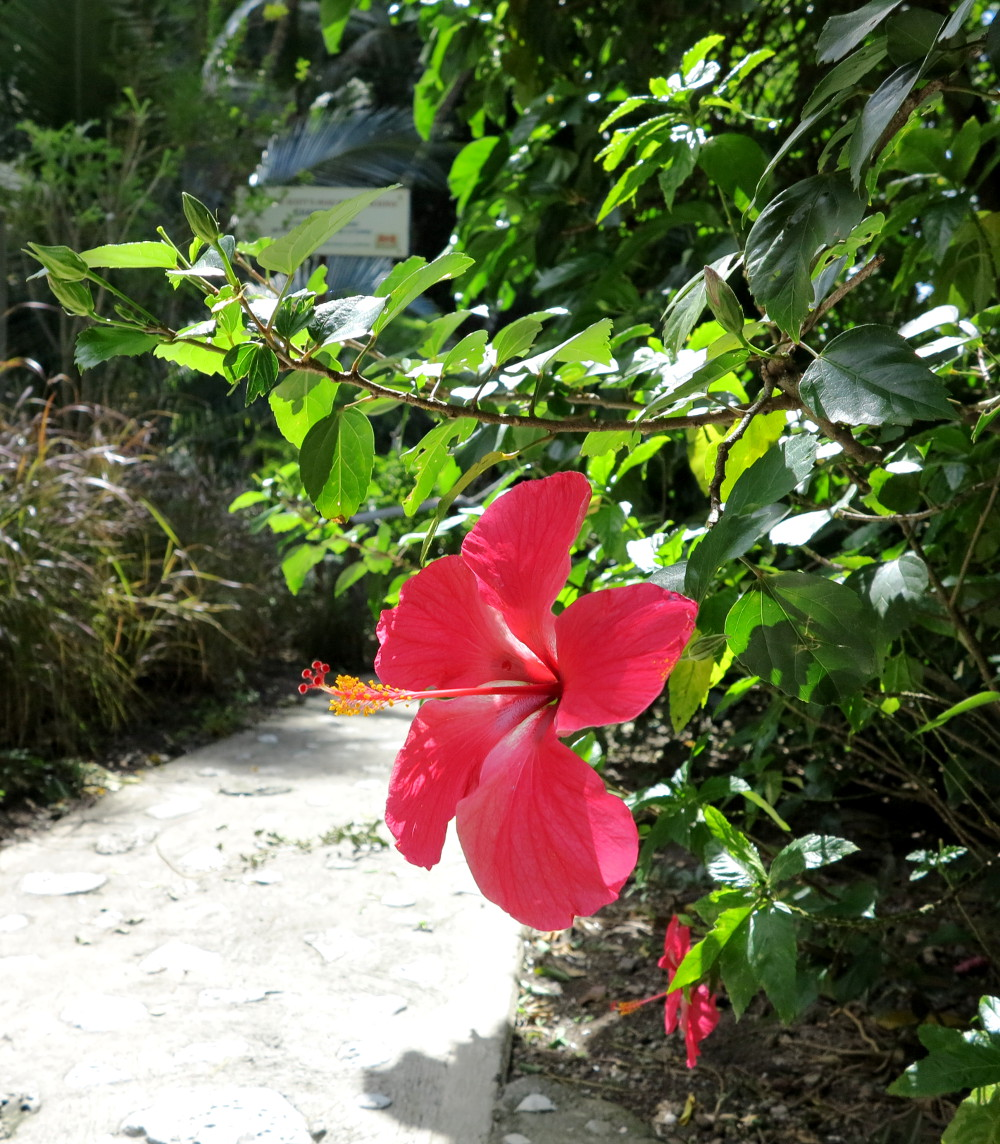 Flower at Champagne Reef Dominica Double-Barrelled Travel