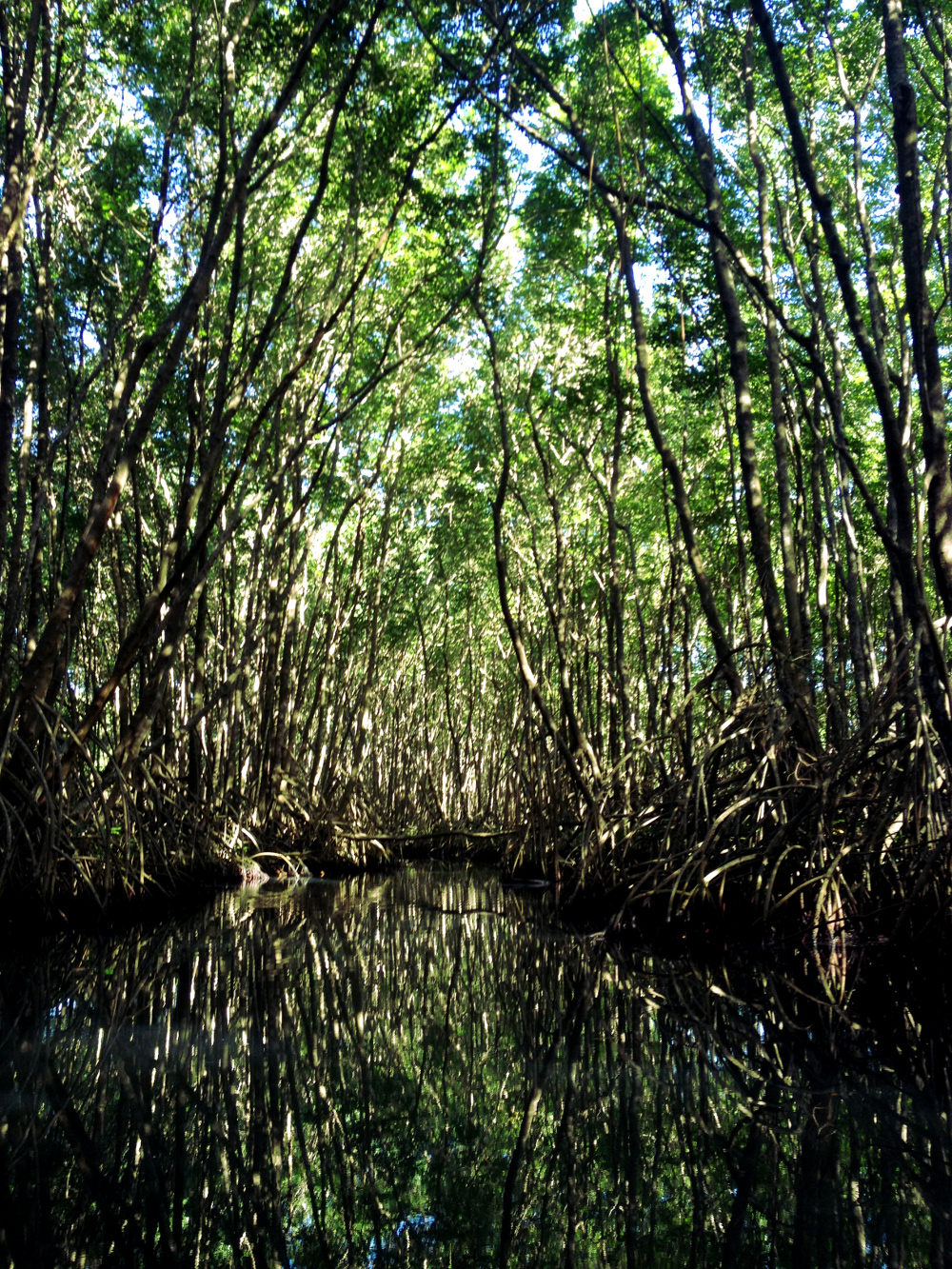 Kayaking mangroves Guadeloupe Double-Barrelled Travel