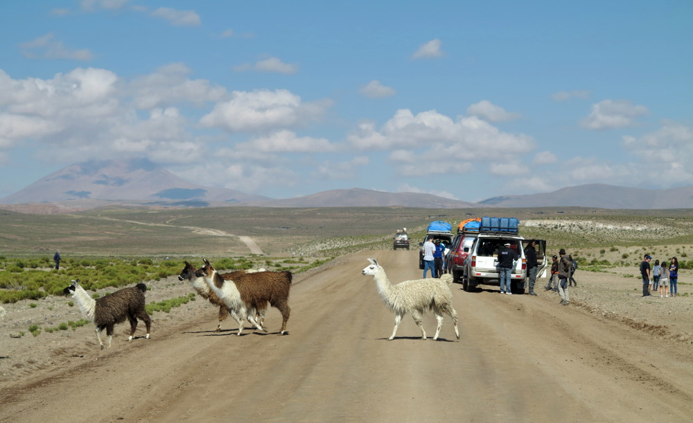 Llama crossing salt flats tour Bolivia Double-Barrelled Travel