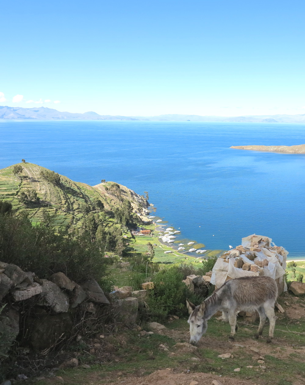 Donkey enjoys the quiet on Isla del Sol Double Barrelled Travel