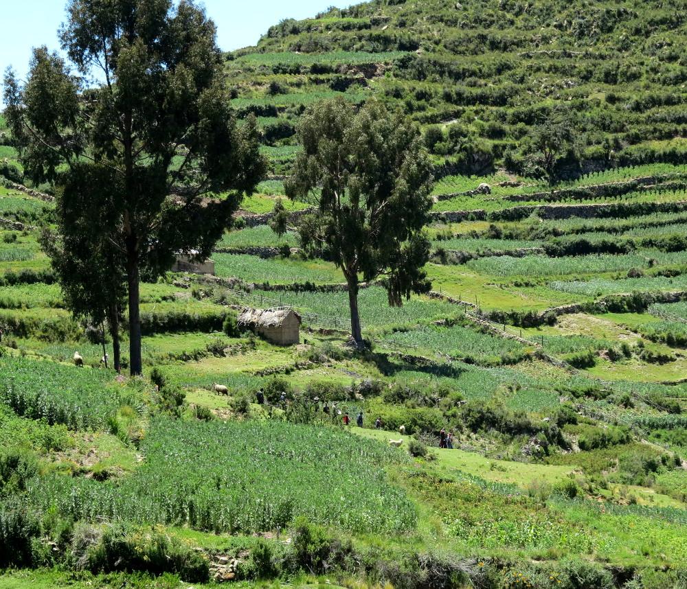 Fields on Isla del Sol Double Barrelled Travel