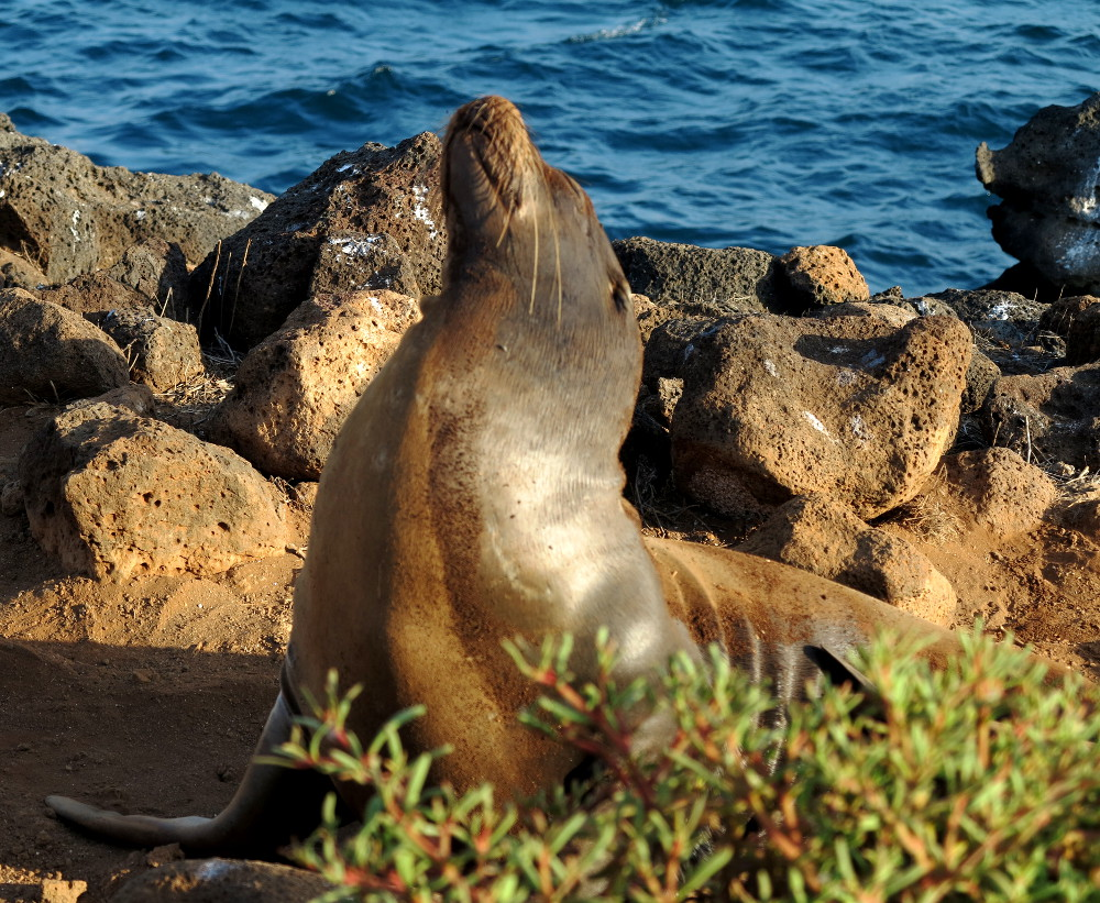 photo essay animals of the galapagos double barrelled travel sea lion