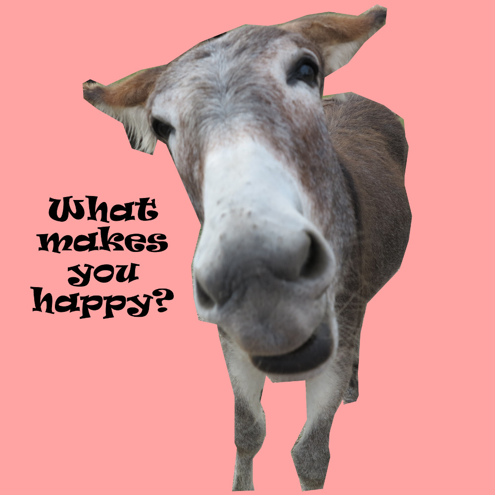 What make you happy donkey Double-Barrelled Travel
