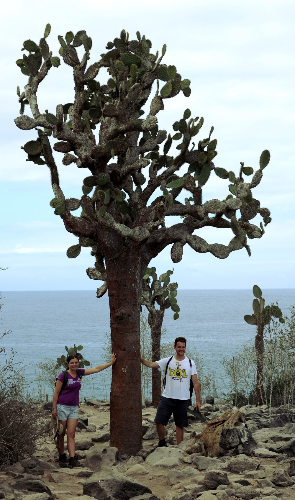 Giant cactus on Santa Fe Galapagos Double-Barrelled Travel