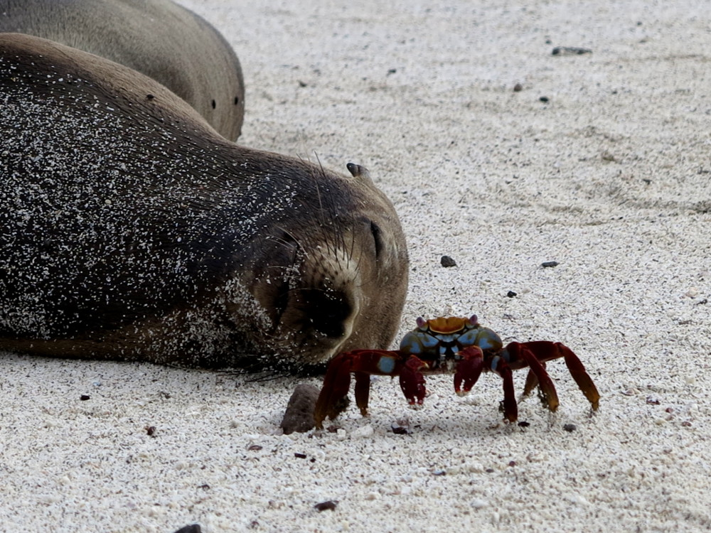Sea lion and crab Galapagos Double-Barrelled Travel