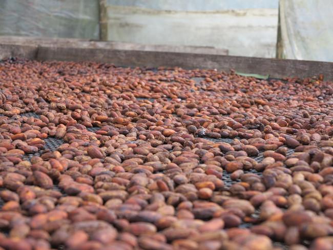 Cacao beans Ecuador Double-Barrelled Travel