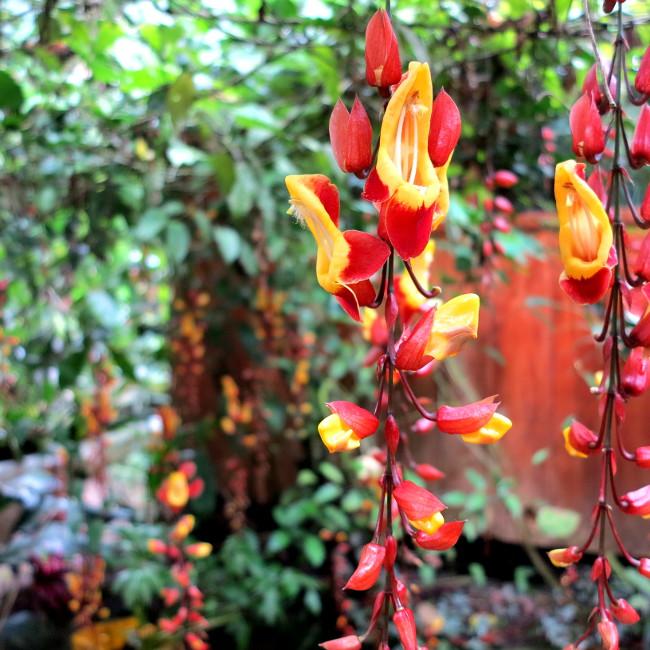 Flowers Mindo Ecuador Double-Barrelled Travel