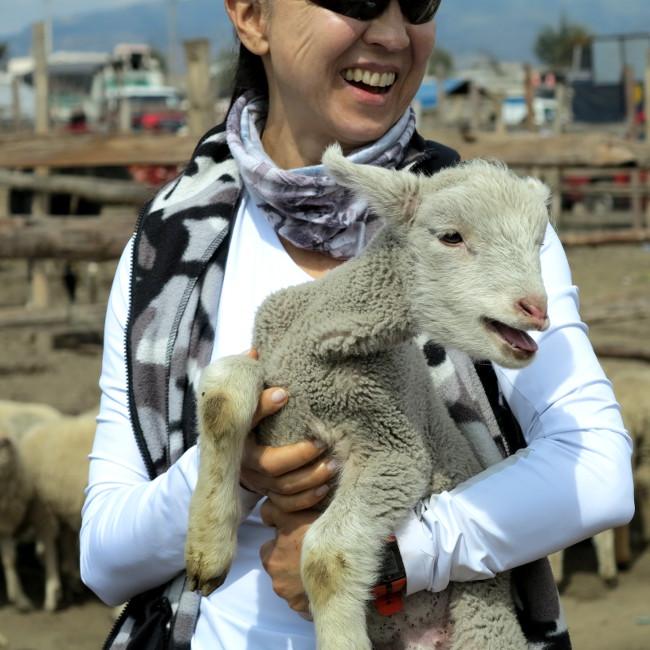 Lamb Otavalo Ecuador Double-Barrelled Travel