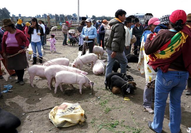 Otavalo animal market Ecuador Double-Barrelled Travel