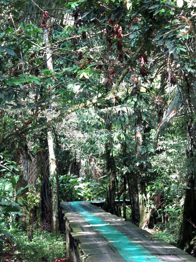 Sani Lodge boardwalk Double-Barrelled Travel